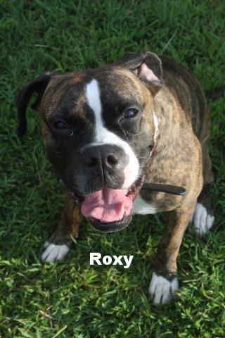roxy3.jpg