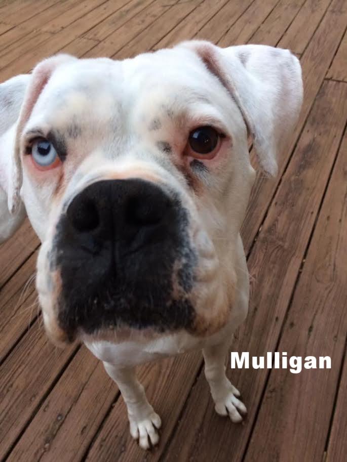 mulligan6.jpg