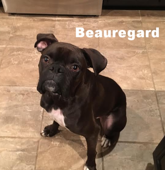 Beauregard5.jpg
