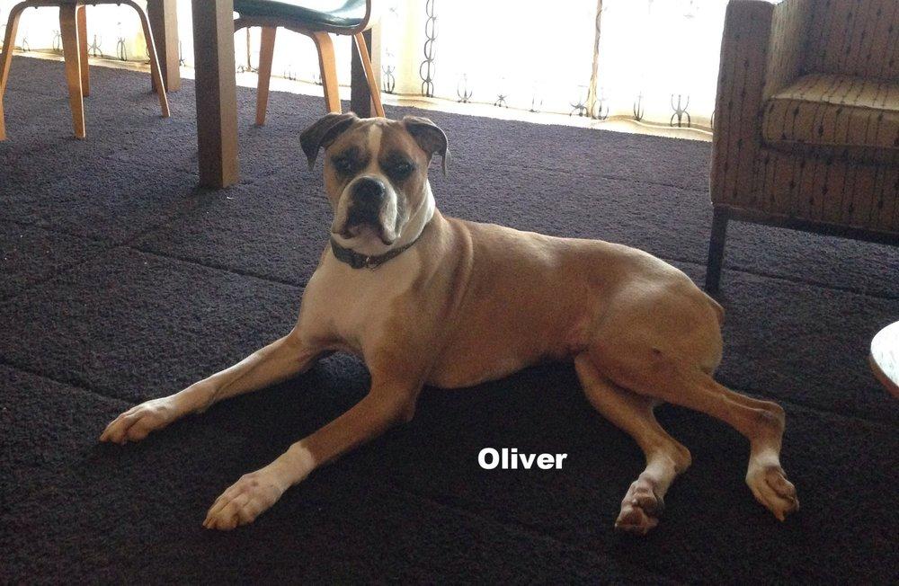 Oliver.jpg