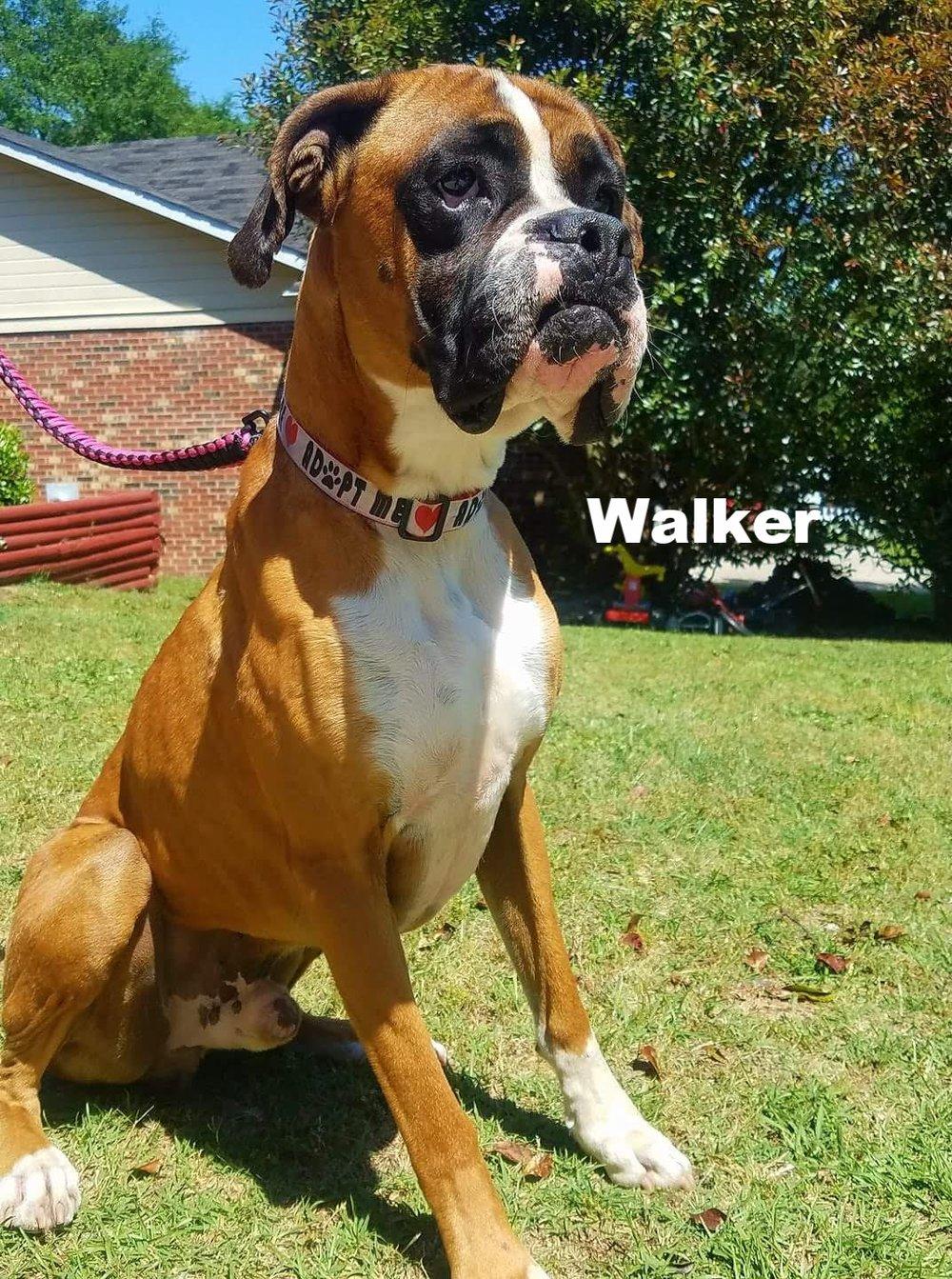 Walker4.jpg