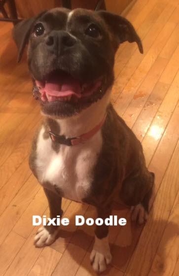 Dixie doodle 2.jpg