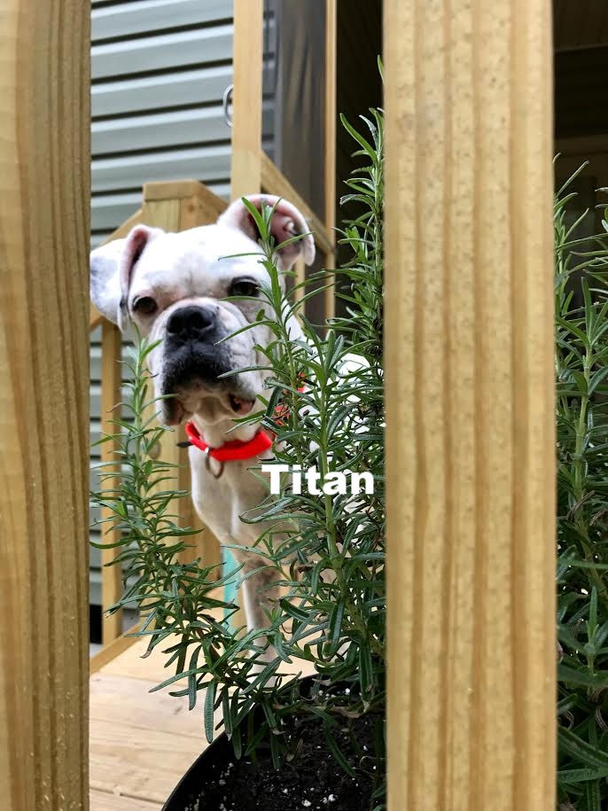 titan4.jpg