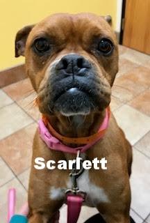 scarlett4.jpg