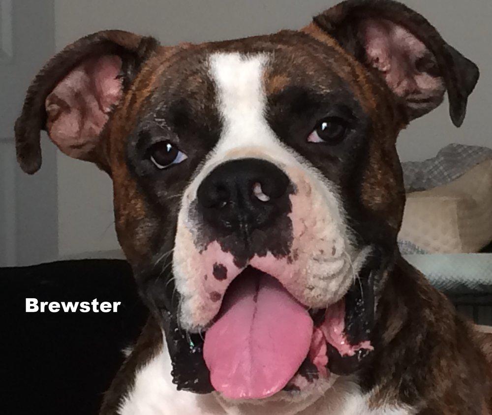 Brewster.jpeg