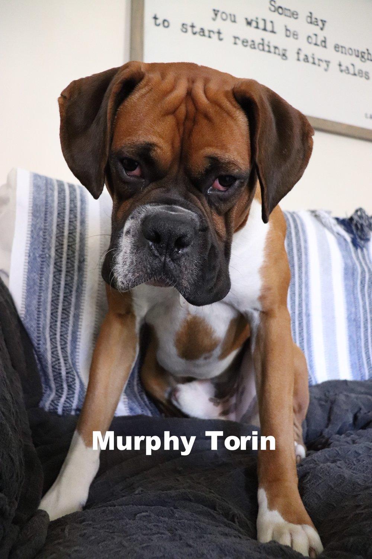 Murphy Torin.JPG