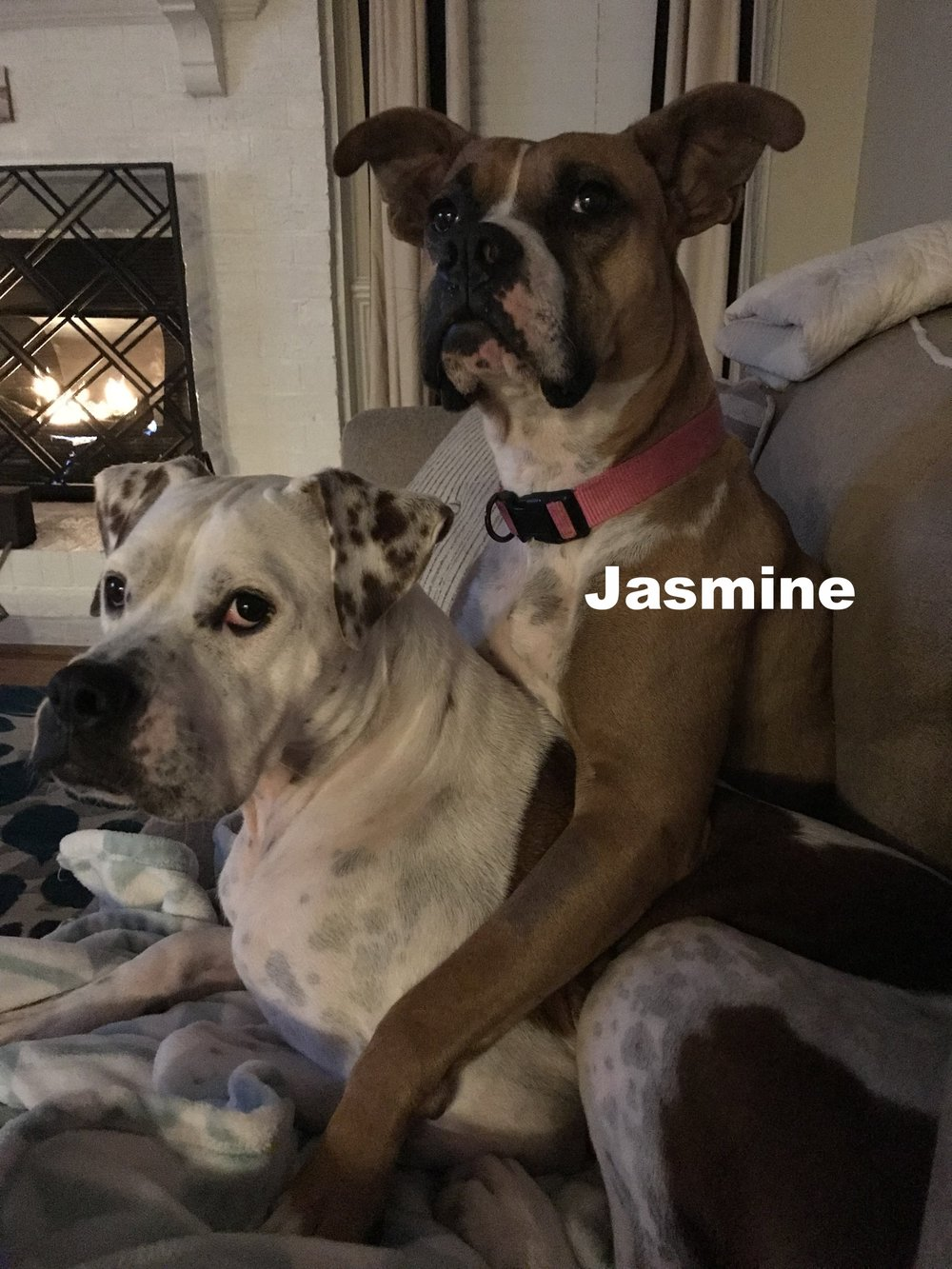 jasmine and Queso.jpg