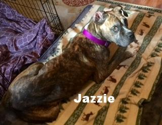 Jazzie2.JPG