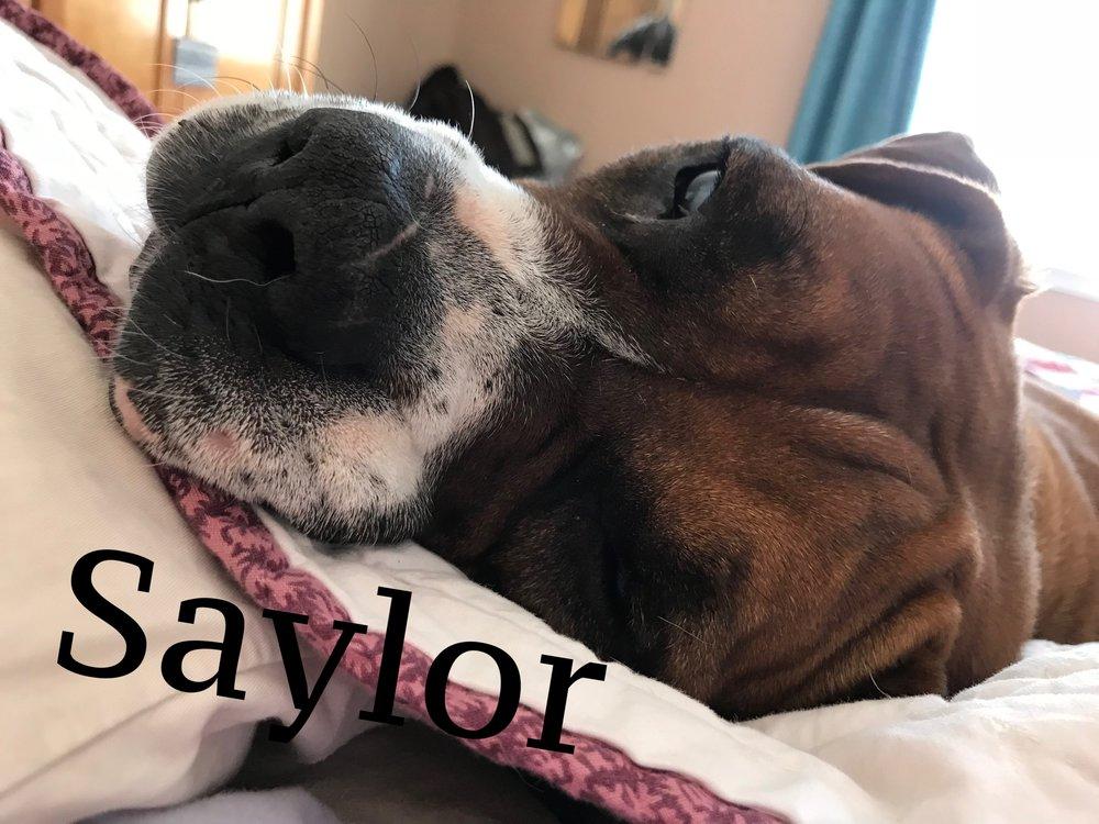 saylor.JPG