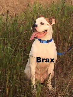 brax5.jpg