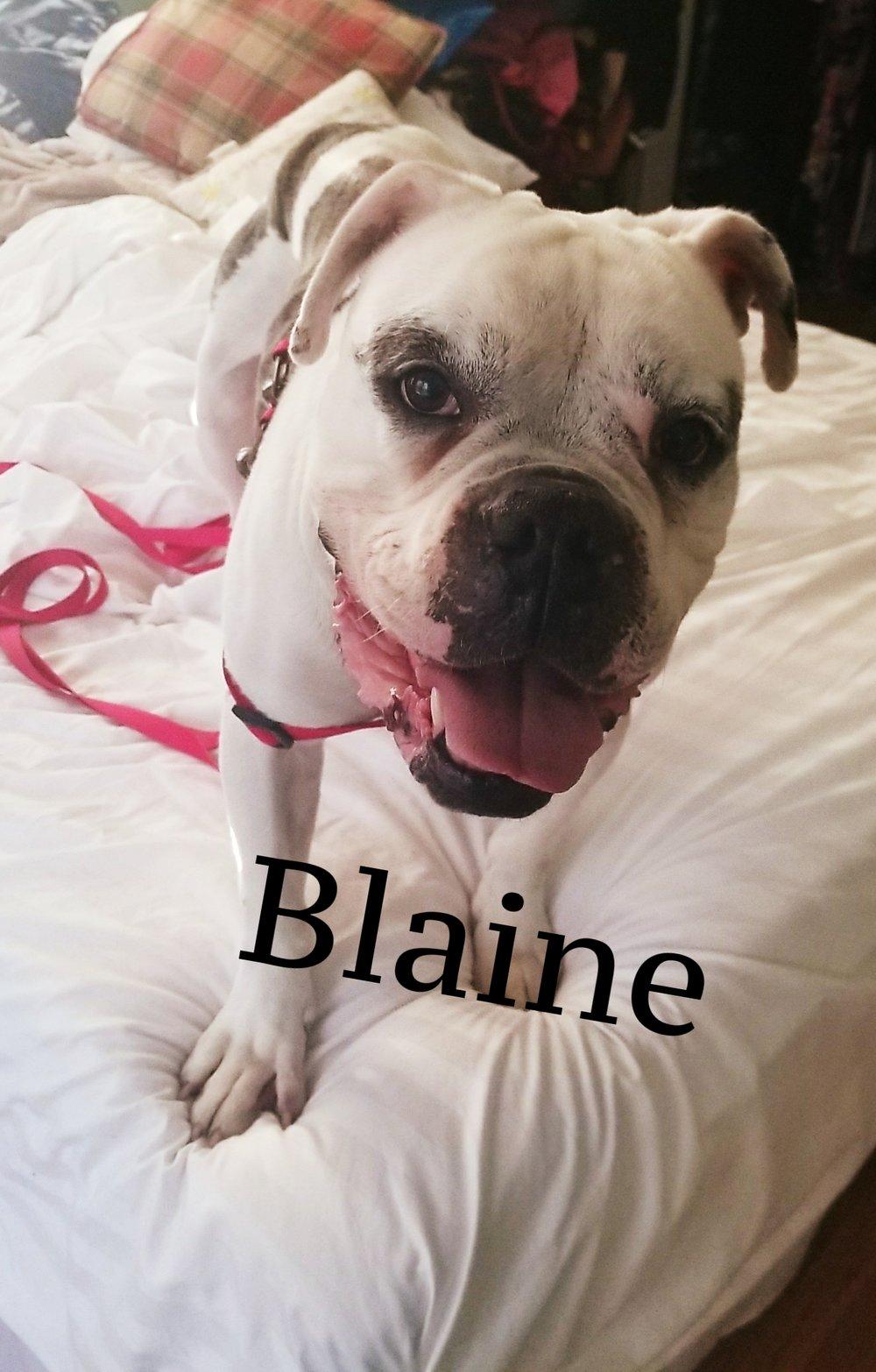 blaine.jpg