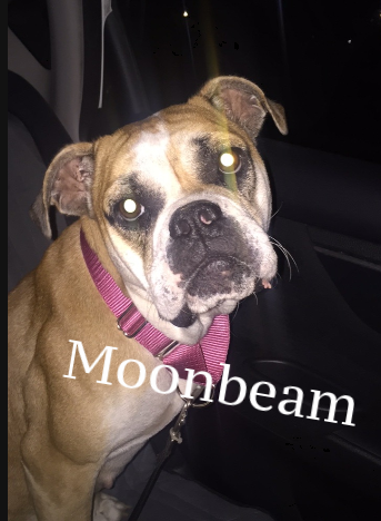 moonbeam.png