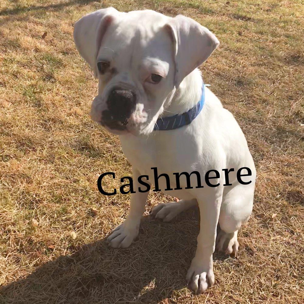 cashmere2.JPG