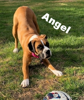 angel tails.jpg