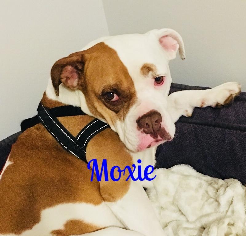 moxie4.jpg