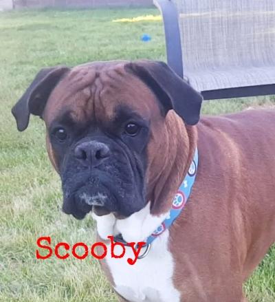 Scooby+2.jpg