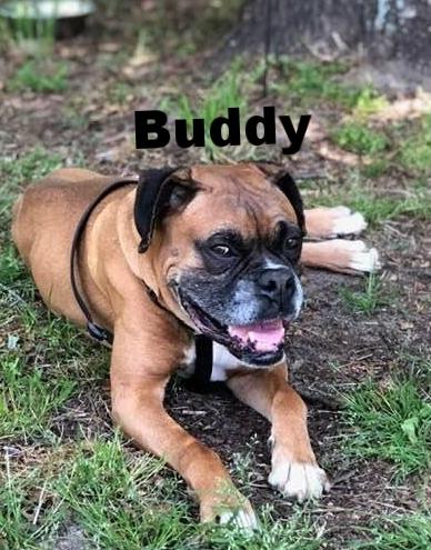 buddy3.jpg