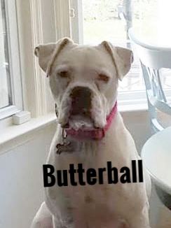 ButterballHT.jpg