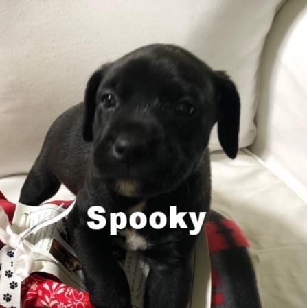 SpookyHT.jpg