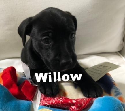 WillowHT.jpg