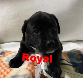 RoyalHT.jpg