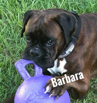 BarbaraHT.jpg