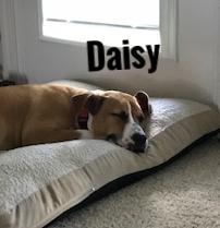 DaisyHT.jpg