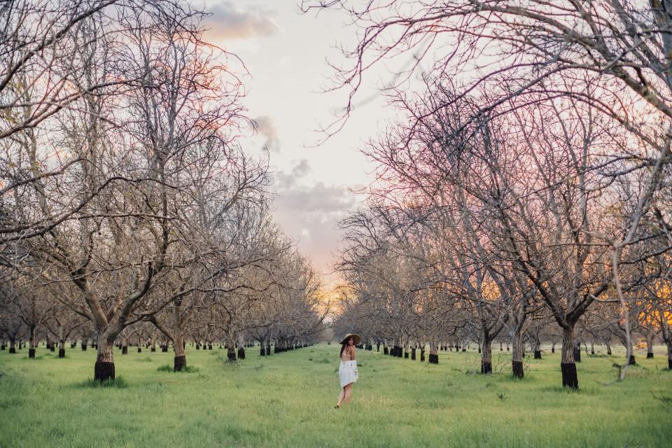 NorCal Weddings | Gover Ranch | Anderson, CA