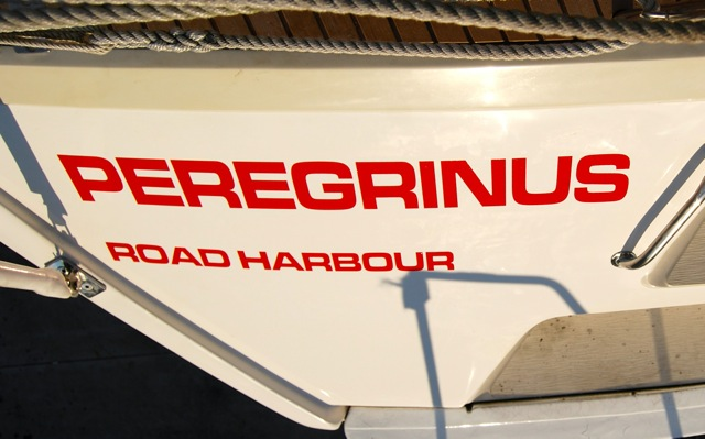 Peregrinus popa.jpg
