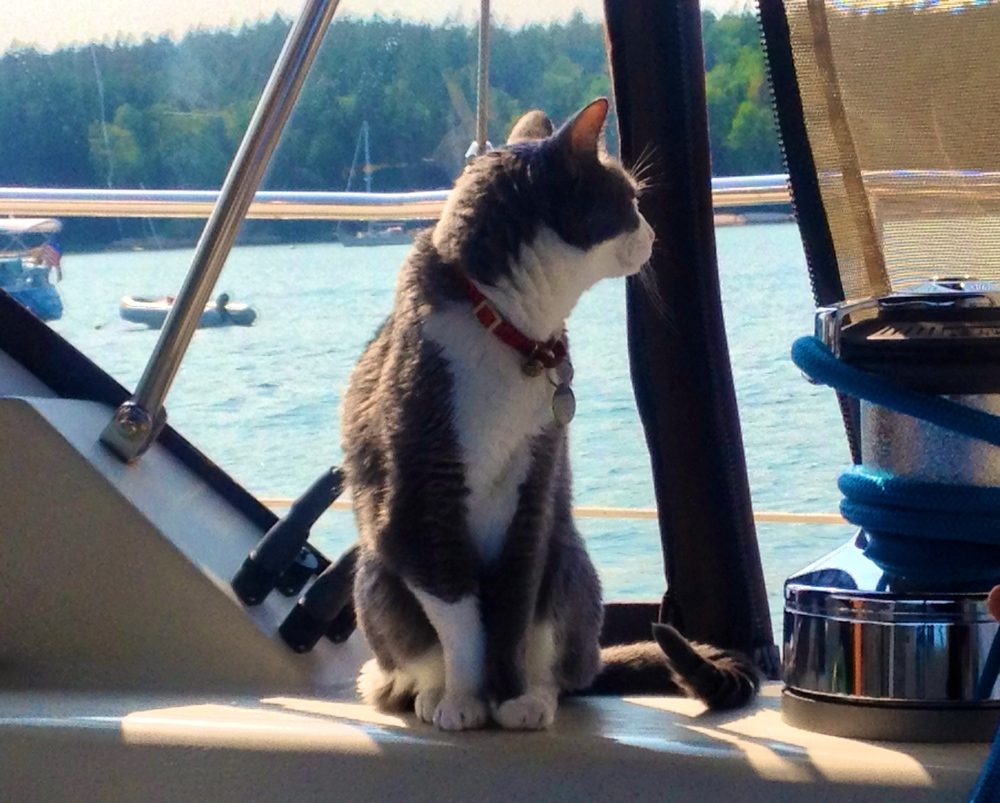 The Alférez looks out at other boats in Mackerel Cove, Swans Island.  31 July 2014.