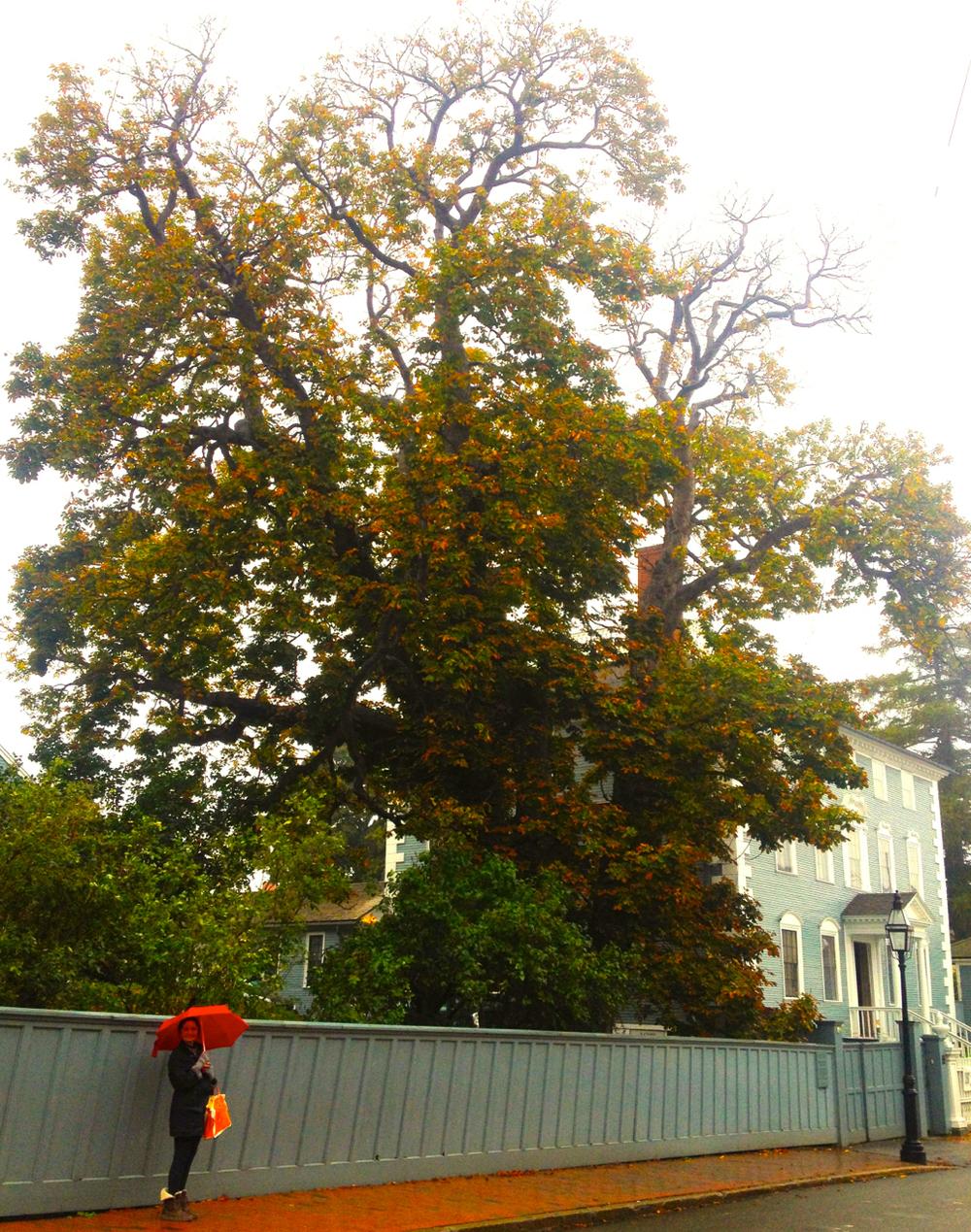 Moffat-Ladd Horse-Chestnut Portsmouth.jpg
