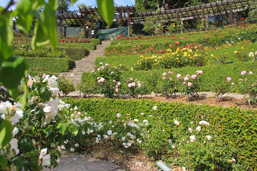 The Berkeley Rose Garden