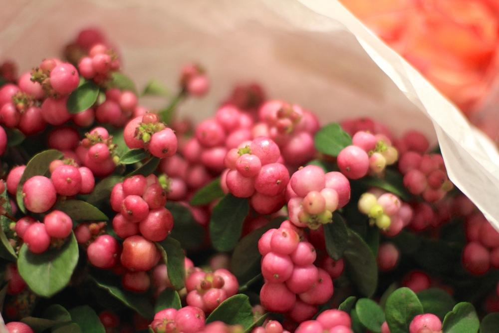 Pink Hypericum Berries