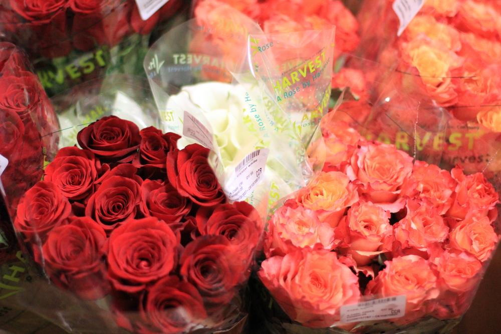 Freedom & Free Spirit Roses