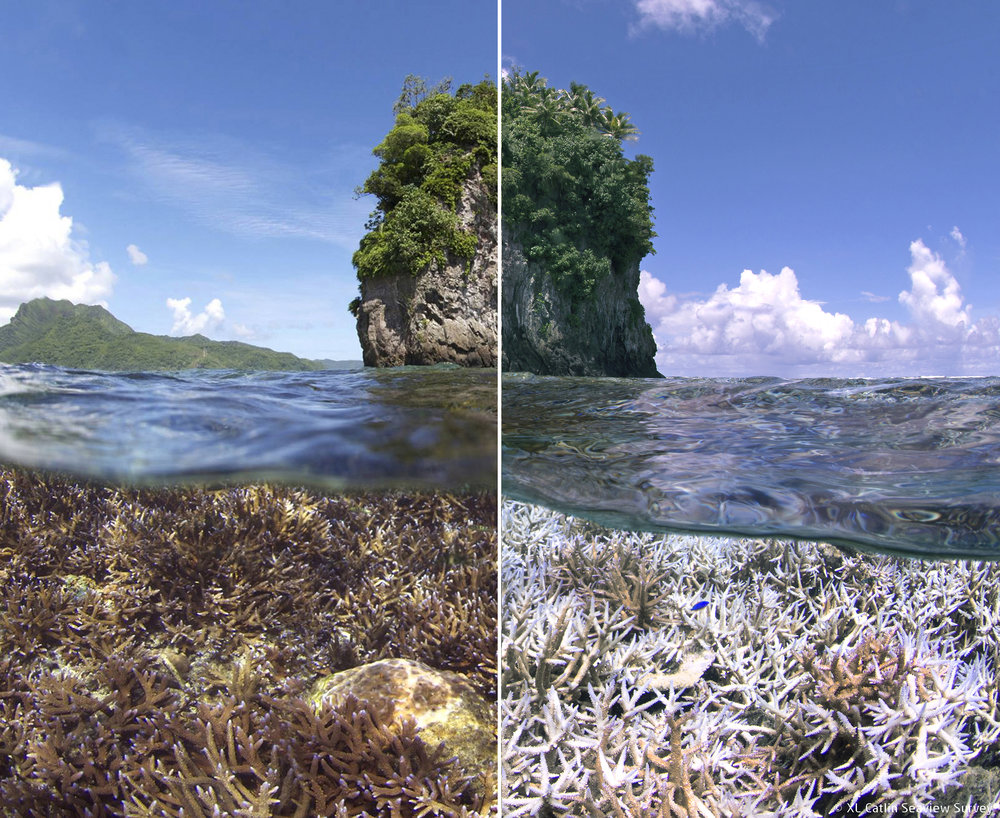 American-Samoa  © XL Catlin Seaview Survey - The Ocean Agency - Richard Vevers
