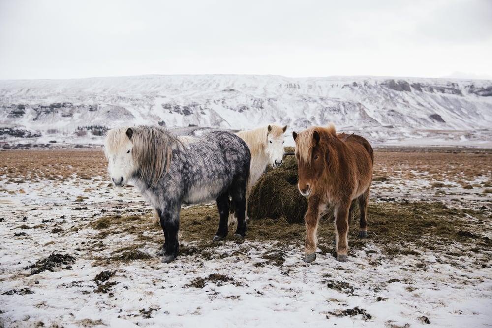 ICELAND-35.jpg