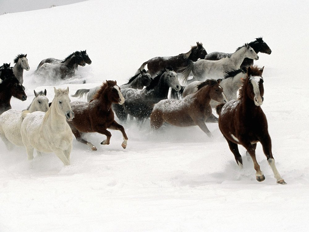horses-snow-free-pet-category-horse_365196.jpg