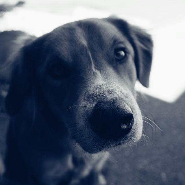 Dogs of Ojai