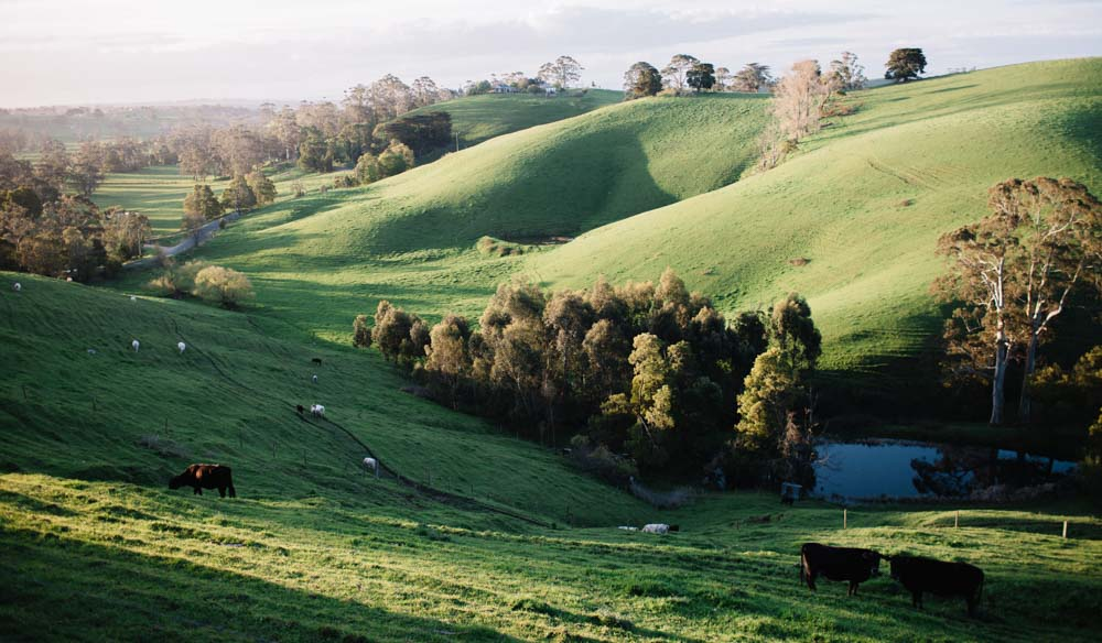 The Poowong hills surrounding Tamsin Carvan's Gippsland property. IMAGE:  Brenner Lowe .