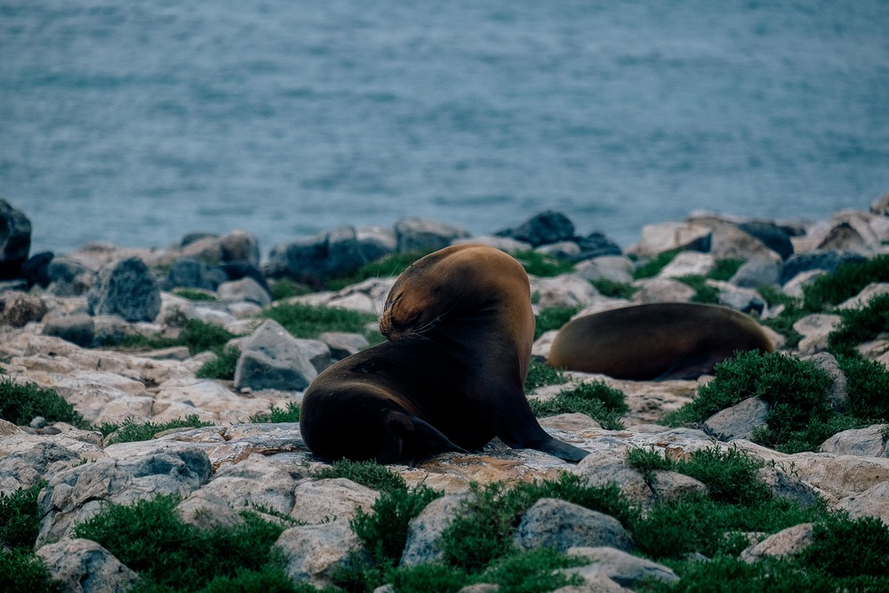 We watched as the Galapagos sea lions stretch and bathed in the sun.