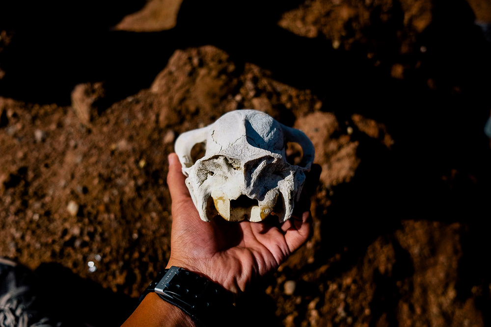 At the border of Chile and Bolivia (Hito Cajon) as we were setting up to begin our trip from San Pedro de Atacama to Salar De Uyuni, I found a skull of a dead llama.