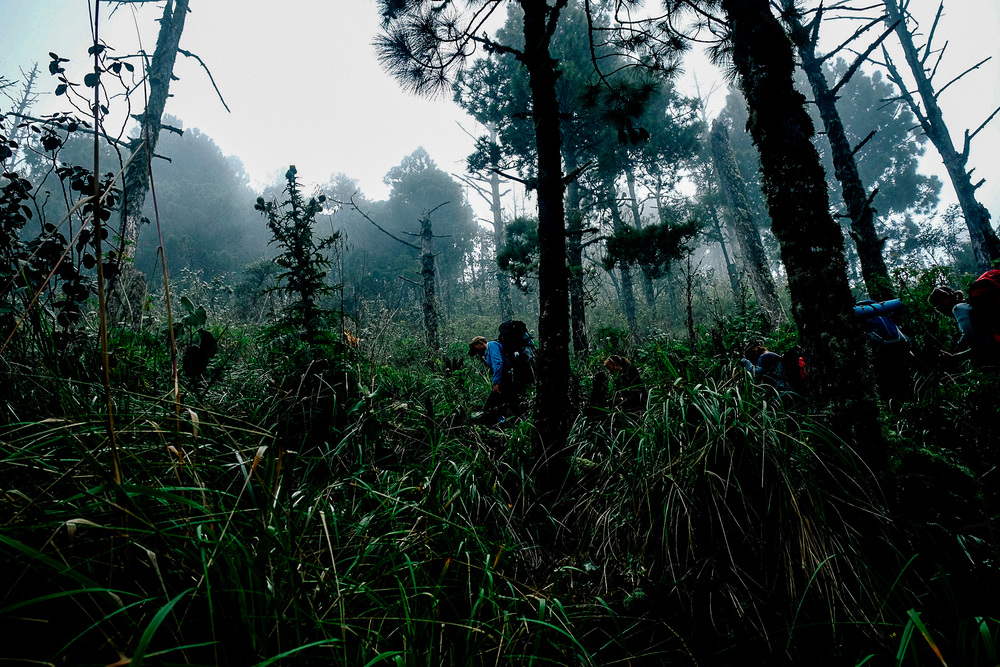 Trekking through one of the unique ecosystems (the cloud forrest) to reach our camp site - 800m below the peak of volcan Acatenango.