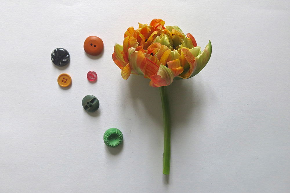 tulipano riccioLOW.jpg