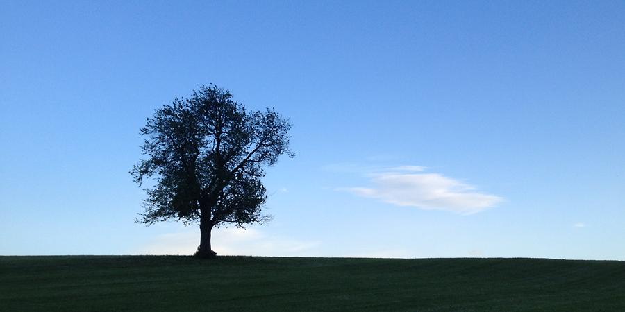 standing watch - (c) mjs 2014