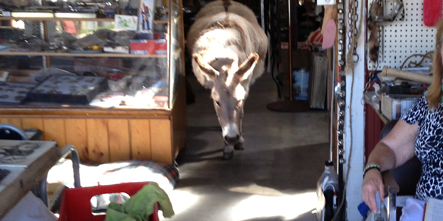 it really is a donkey in a store (c) mark somple 2014