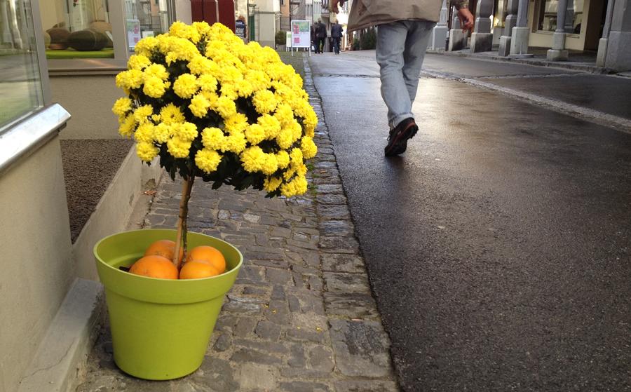 flower getting vitamin c (c) mark somple 2014