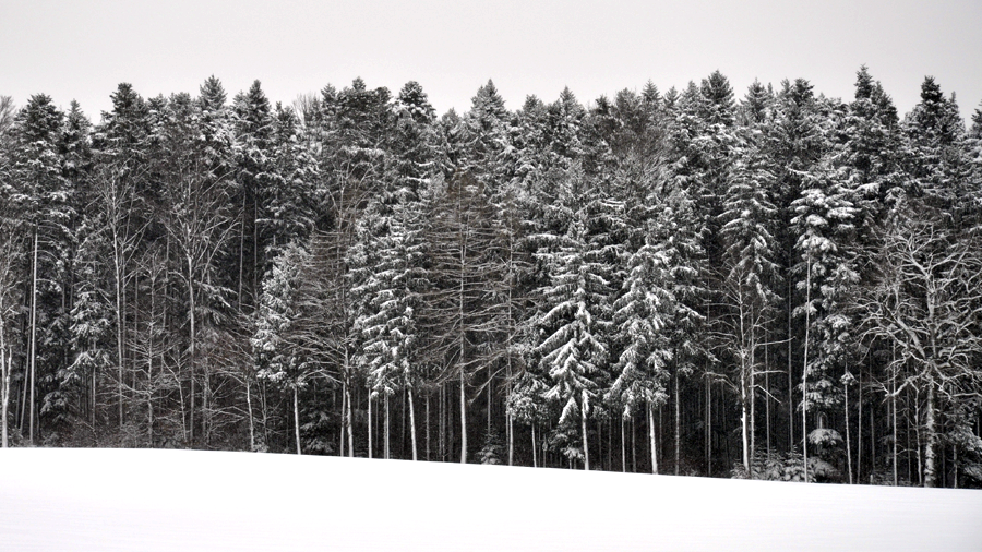 fresh snow (c) mark somple 2014