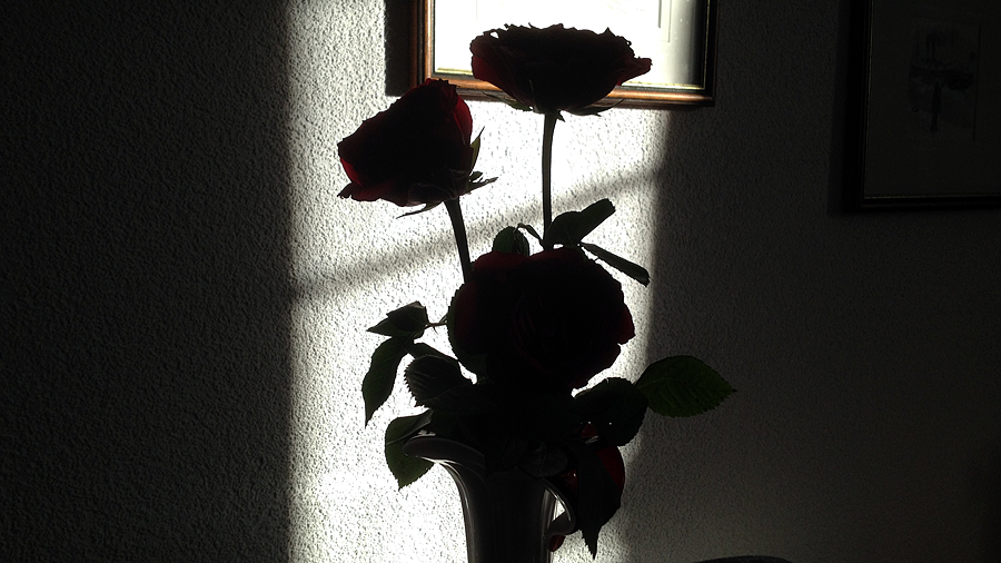 shadow roses (c) mark somple 2015