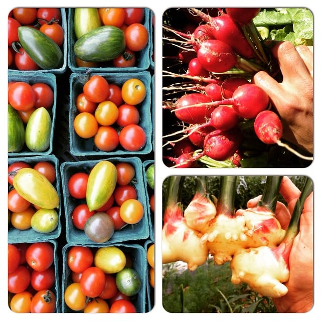 Cherry tomatoes, radishes and baby ginger