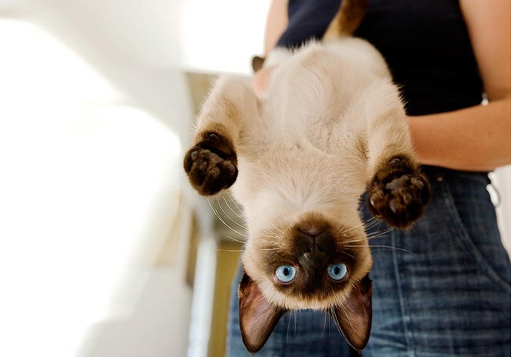 catupsidedown.jpg